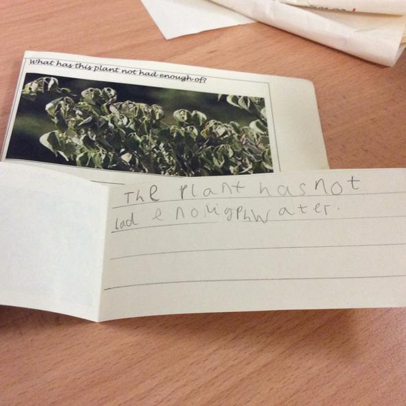 Y2 were plant hunters-whats wrong with this plant?