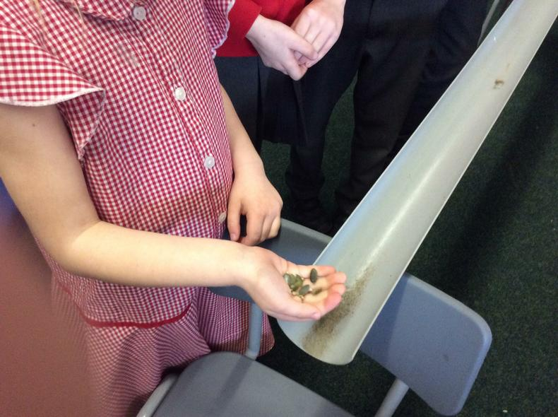 Yr 3 were investigating seed dispersal.