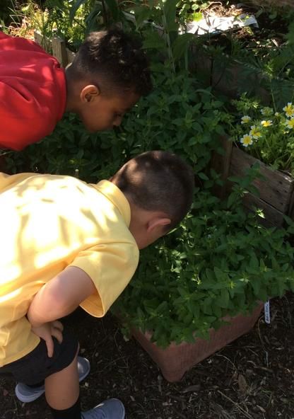 Yr 2 smelling the herb garden.