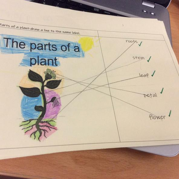 Naming the parts of the plant.