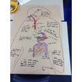 Digestive system research.
