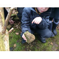 Woodlice hiding under stones!