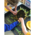 sunflower seed picking