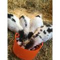 Breakfast 'goat-style'!