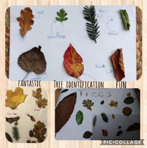 Tree identification challenge