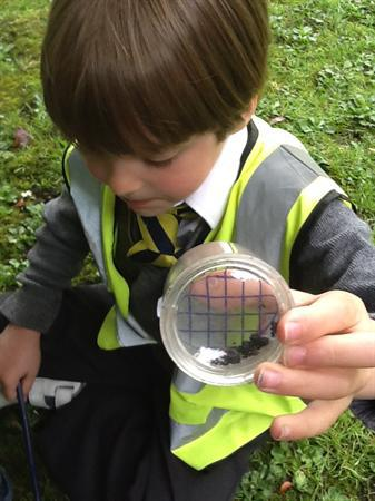""" I 've found a woodlouse!"""