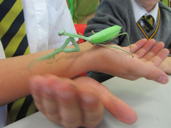 Chameleons Class had some special visitors today