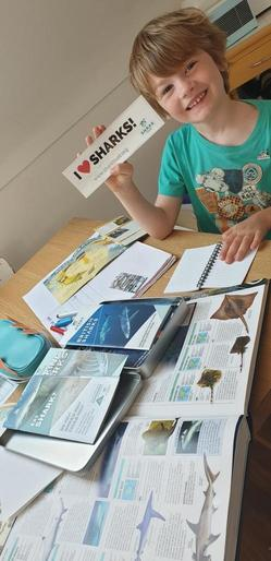 Willem learning about different types of sharks!