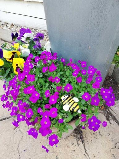 Noah's bee craft in the garden