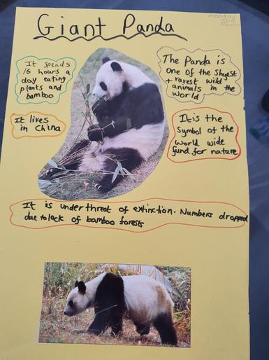 Kayla's Giant Panda poster