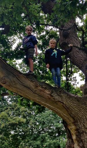 Charlie and Alfie in a tree!