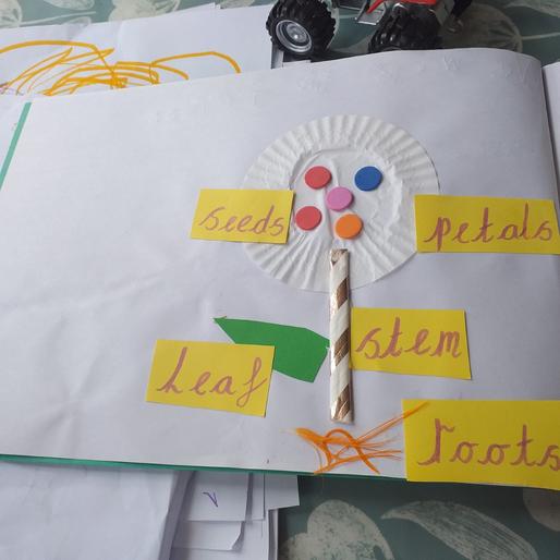 Caolfhionn's plant diagram