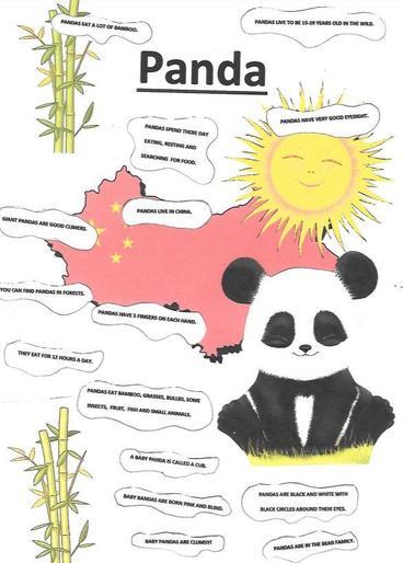 Maria's amazing panda poster