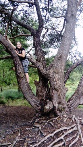 Amara's been climbing trees!