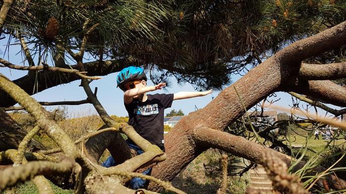Bobby climbed a tree!