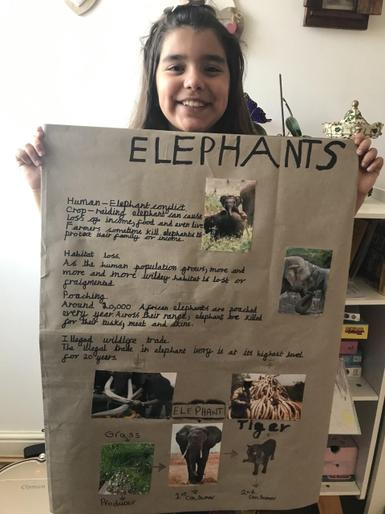 Joanna's poster on elephants