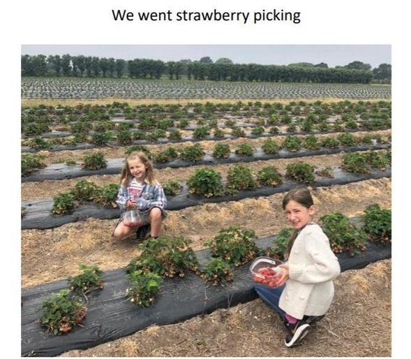 Maisy went strawberry picking!