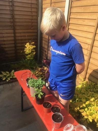 Albert the gardener
