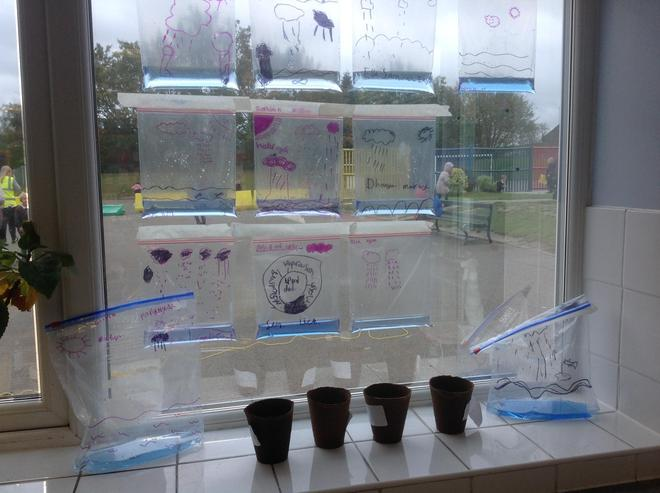 Our Water Cycles