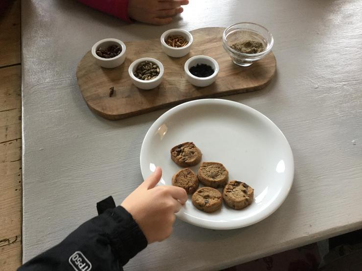 Locust flour chocolate chip cookies