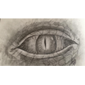 Art Dragon Eye Project
