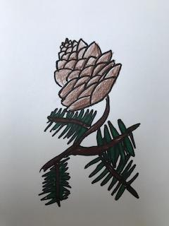 Scarlett's fir cone