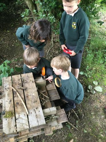 Who is staying in the bug hotel?