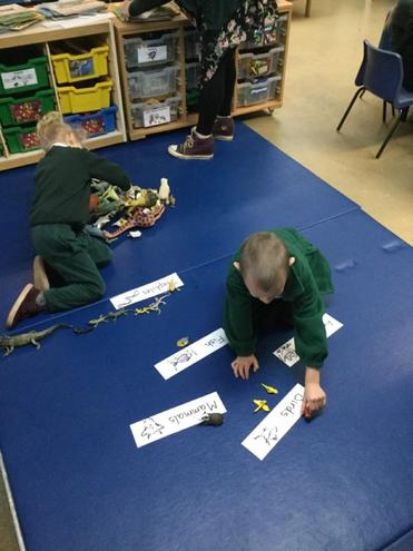We started by categorising the animals into different groups.