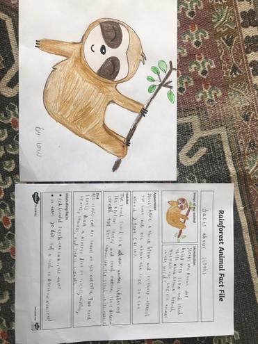 Louis cartoon sloth
