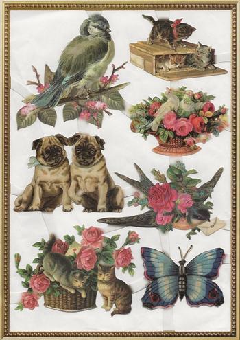 Pugs, birds and butterflies