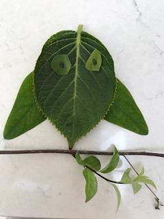 Scarlett's leaf bird