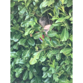 Who is in the bush?