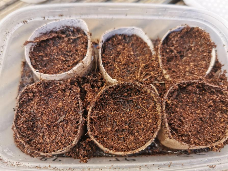 Fill your mini planters with some soil...