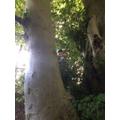 Sam up a tree