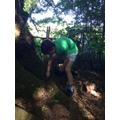 Sam investigating trees