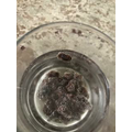 Jessica made raisins float with fizzy water