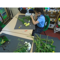 We have observed plants and identified the different parts