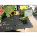 We have carried out research on plants. What jobs do the parts of the plants have?
