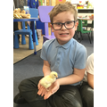 We were scientists watching the chicks.