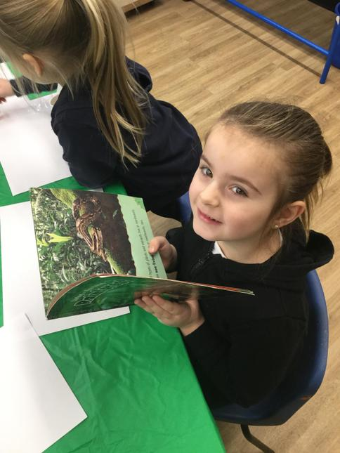 We looked through non-fiction texts to find out about jungle life.