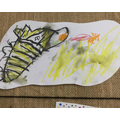 """""""I looked carefully how to draw the zebra."""""""