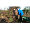 Helping Mr Timby plant our new hedgerow