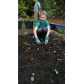 Super planting