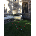 Our poppies planted in the churchyard