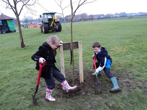 Planting a tree at Longfield Park