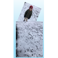Michael (1P) made 100 footprints in the snow.
