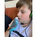 Ollie and his budgie chilling!