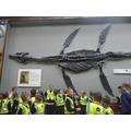 Mary Anning's Pleisaur