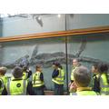 Mary Anning's Ichythosaur.