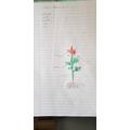 Georgia's Scientific Drawing of Plant
